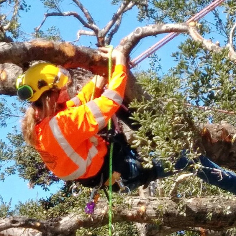 California expects to train 3,000 newly skilled utility/arborists across ten community colleges to help prevent wildfires. Boaz Van Huekelem is among the first trainees from the San Bernardino Community College District.